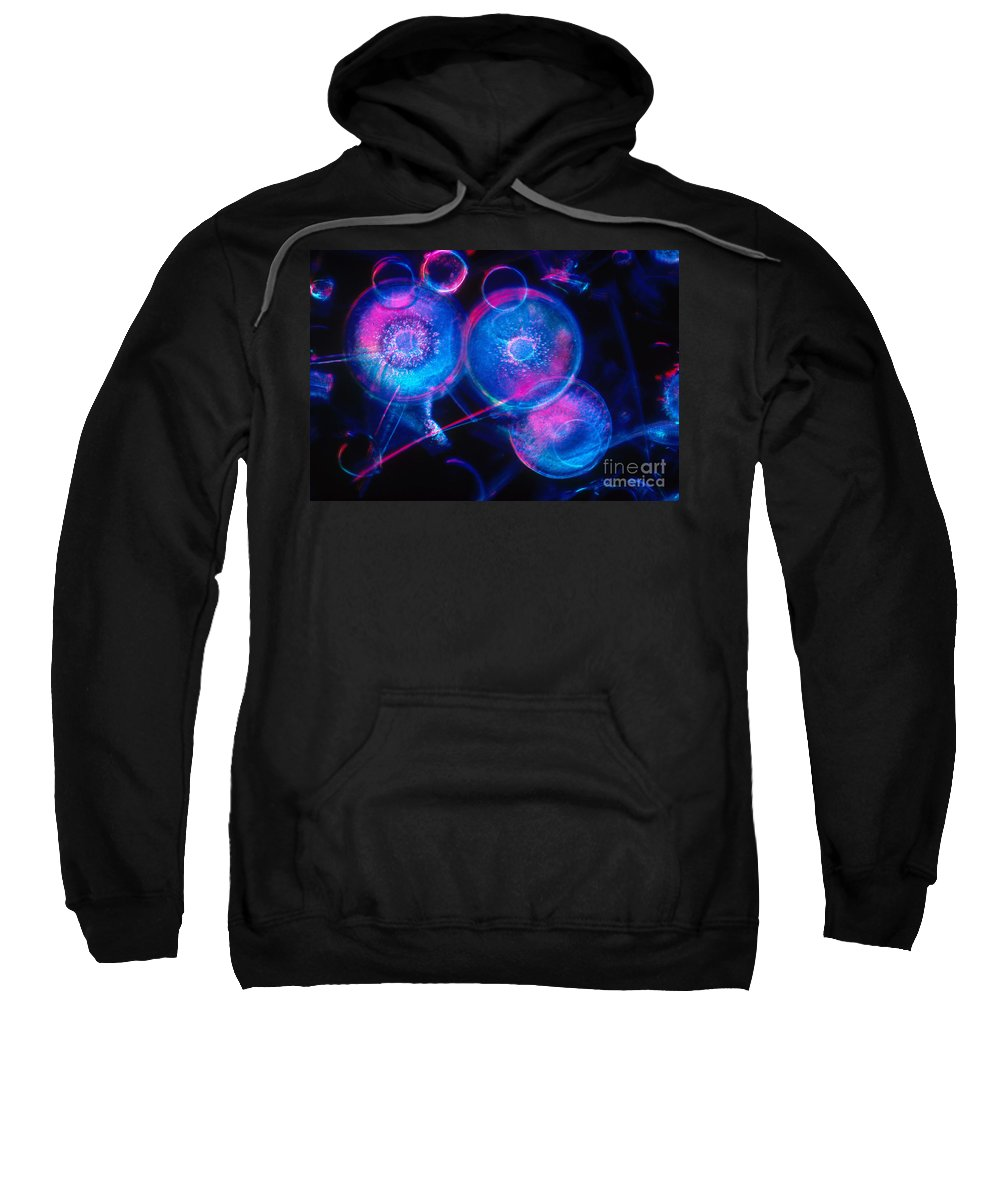 Science Sweatshirt featuring the photograph Hyalodiscus by Michael Abbey and Photo Researchers