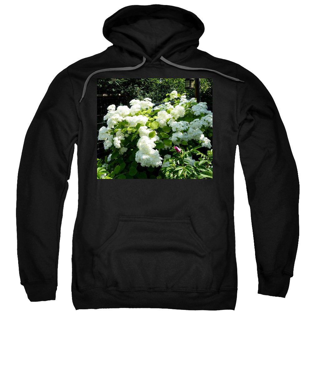 Hydrangeas Sweatshirt featuring the photograph Hydrangeas And A Rose by Will Borden