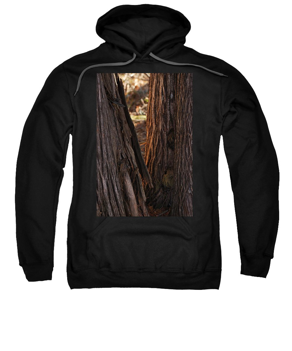 Trees Sweatshirt featuring the photograph In The Cedars by Susan Capuano