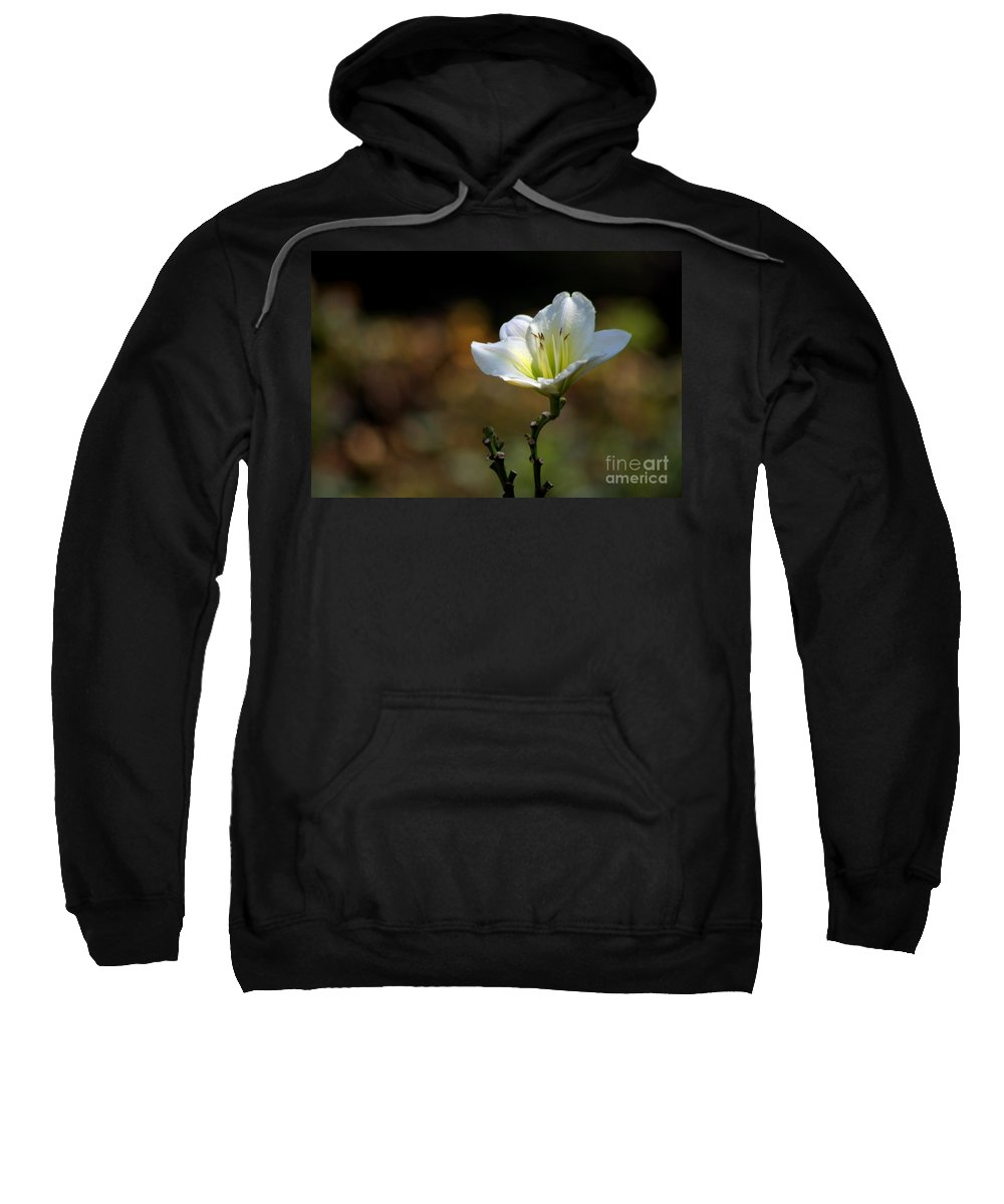 Flowers Sweatshirt featuring the photograph In The Spot Light by Living Color Photography Lorraine Lynch