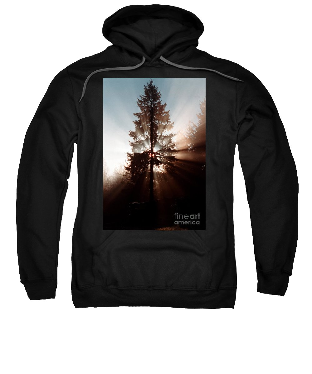 Tree Sweatshirt featuring the photograph Inspiration Tree by Mike Nellums