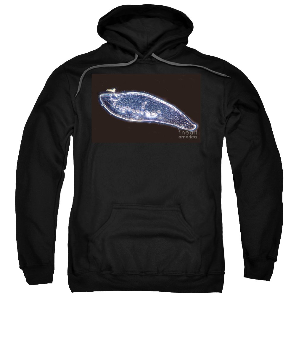 Light Microscopy Sweatshirt featuring the photograph Intestine With Tapeworms by M. I. Walker