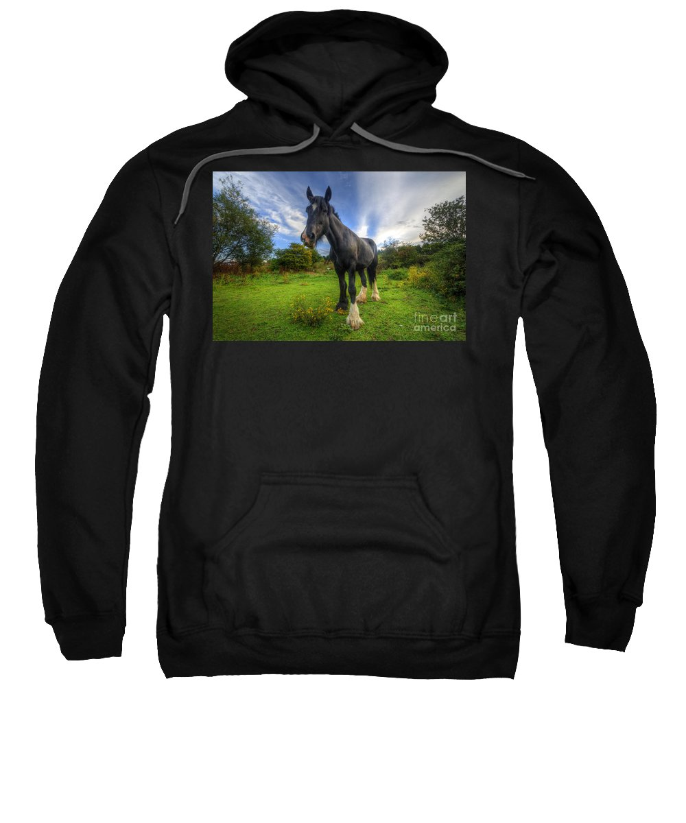 Shire Horse Sweatshirt featuring the photograph Jeany by Yhun Suarez