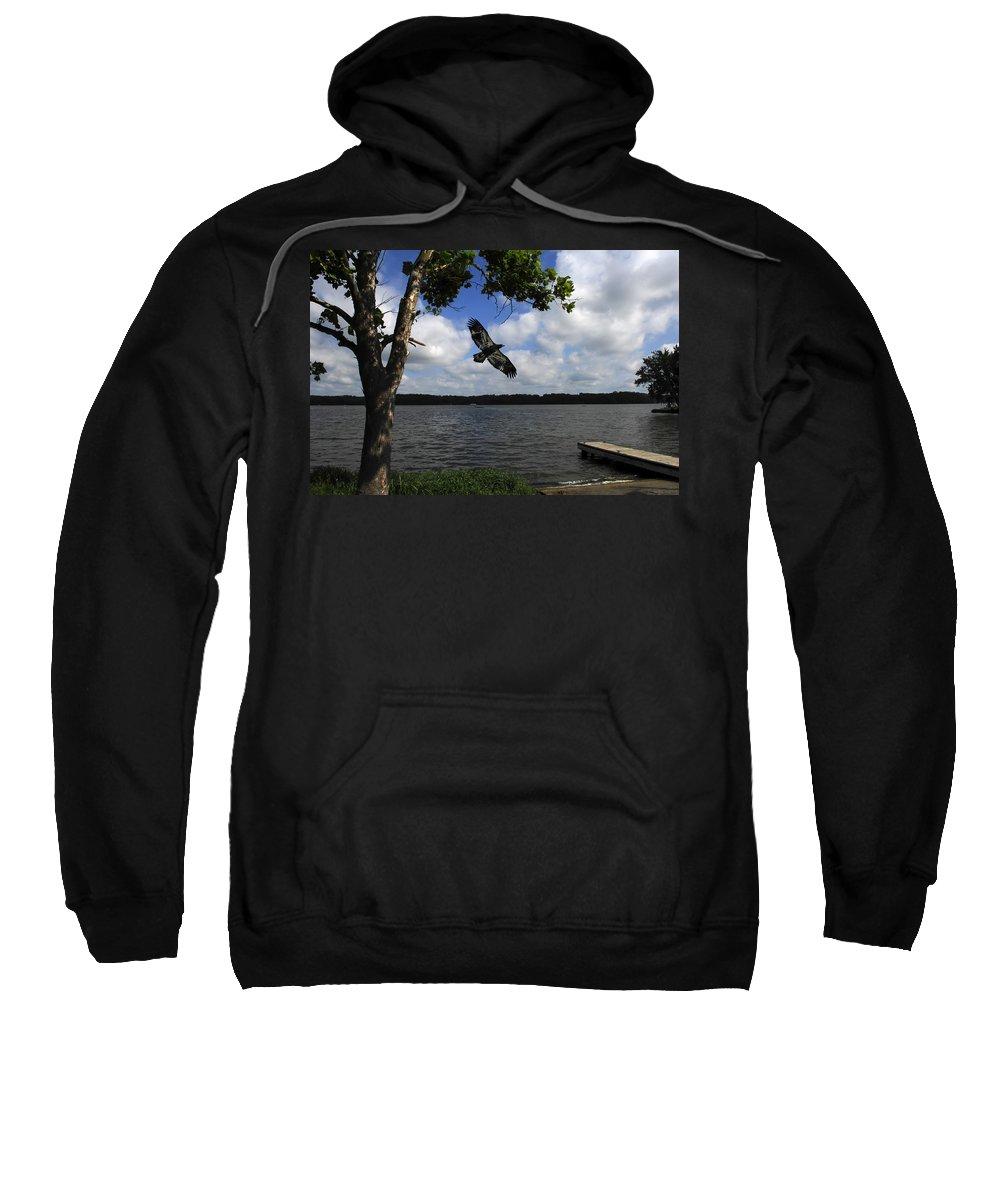 Juvenile Eagle Sweatshirt featuring the photograph Junenile Eagle Rocky Fork Lake by Randall Branham