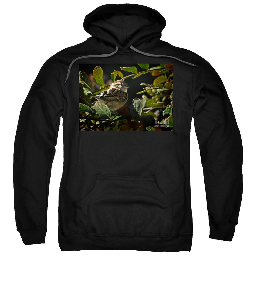 Nature Sweatshirt featuring the photograph Junior Sparrow by Nava Thompson