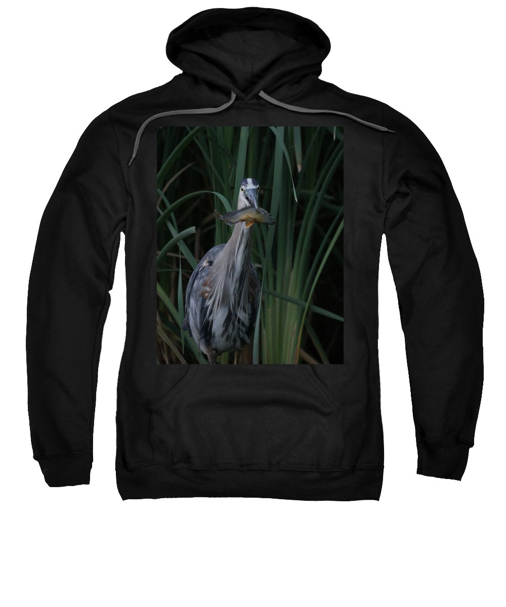 Animals Sweatshirt featuring the photograph Just For You by Ernie Echols