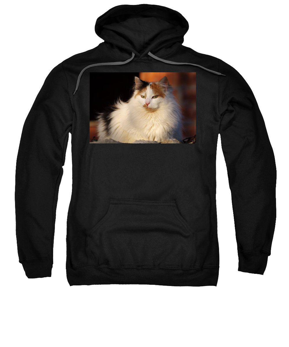 Cat Sweatshirt featuring the photograph King Of The Backyard by Ivan Slosar
