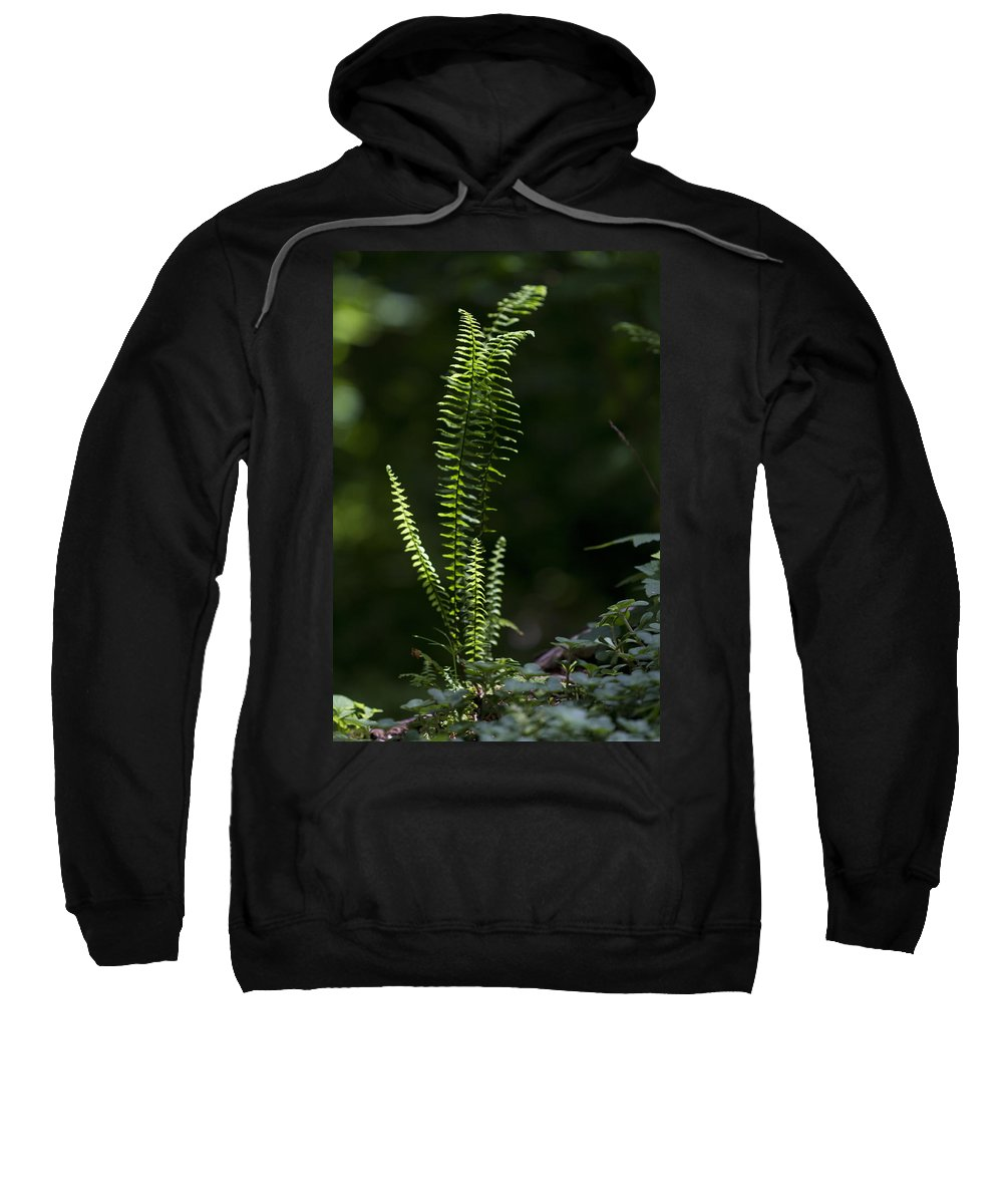 Fern Sweatshirt featuring the photograph Lacy Wild Alabama Fern by Kathy Clark