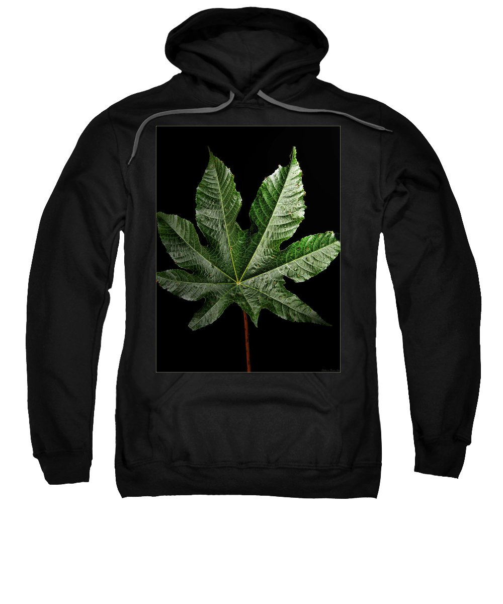 Botanical Sweatshirt featuring the photograph Large Leaf by Debbie Portwood