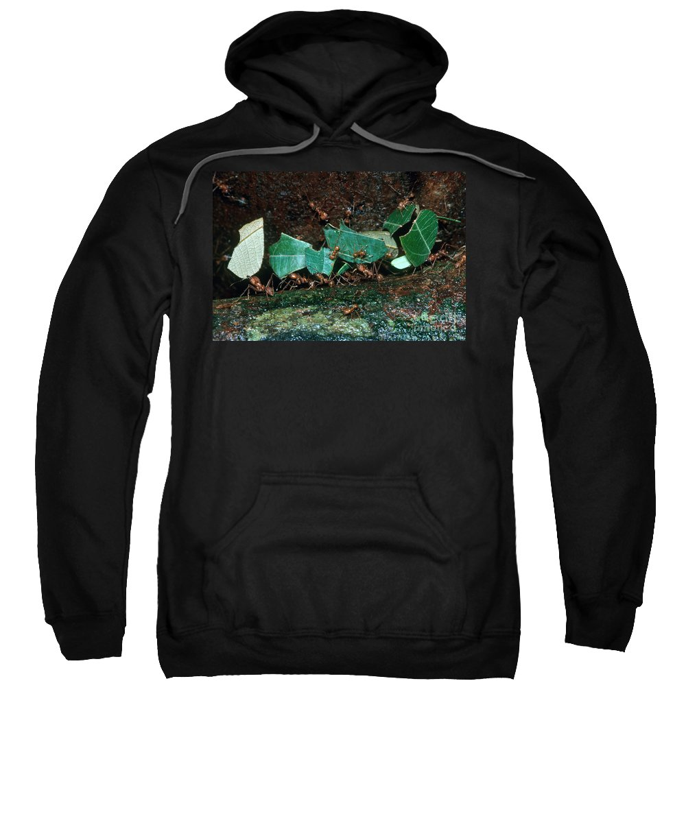 Leafcutter Ants Sweatshirt featuring the photograph Leafcutter Ants by Gregory G. Dimijian