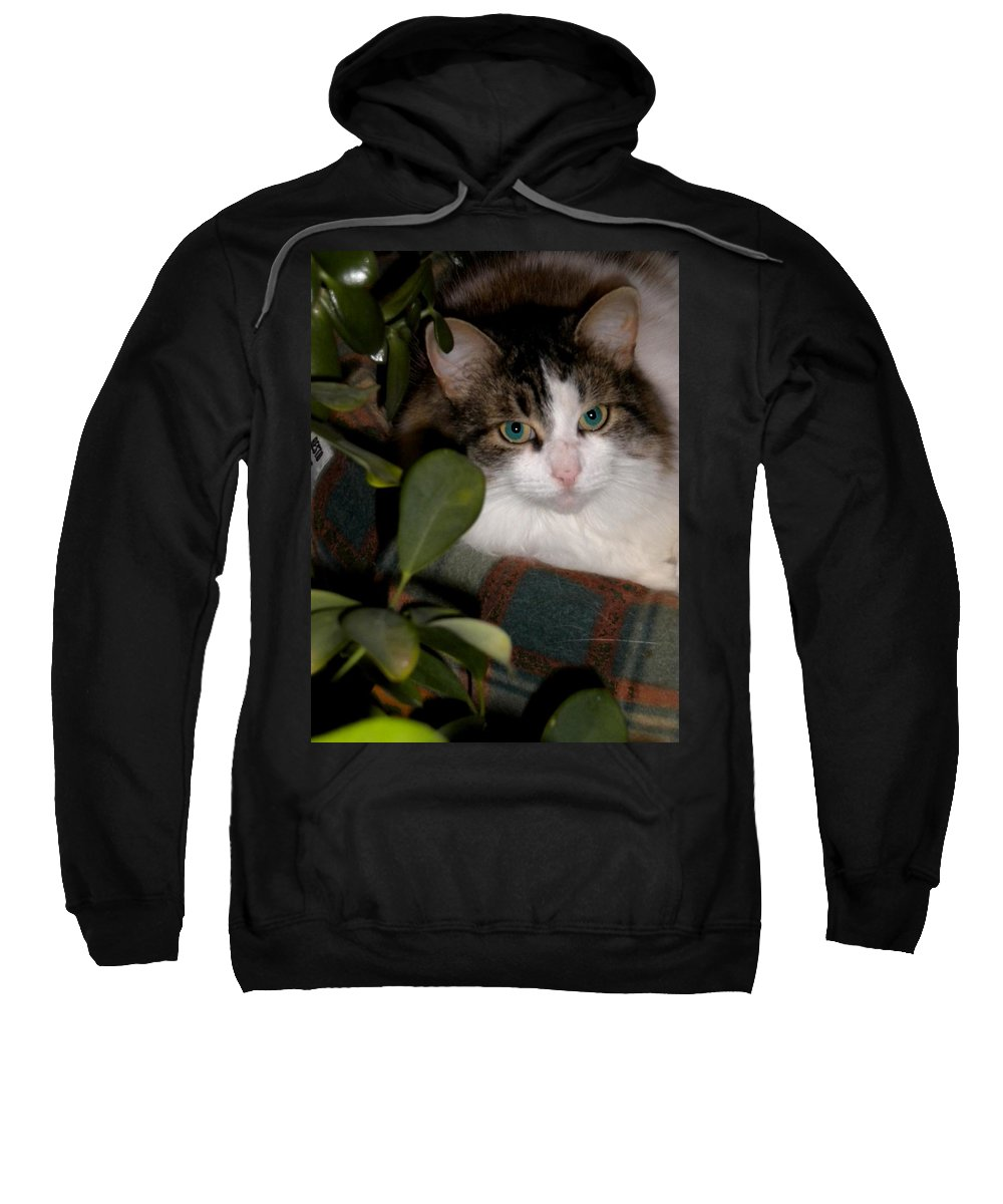 Cat Sweatshirt featuring the photograph Lila's Nest by Renate Nadi Wesley