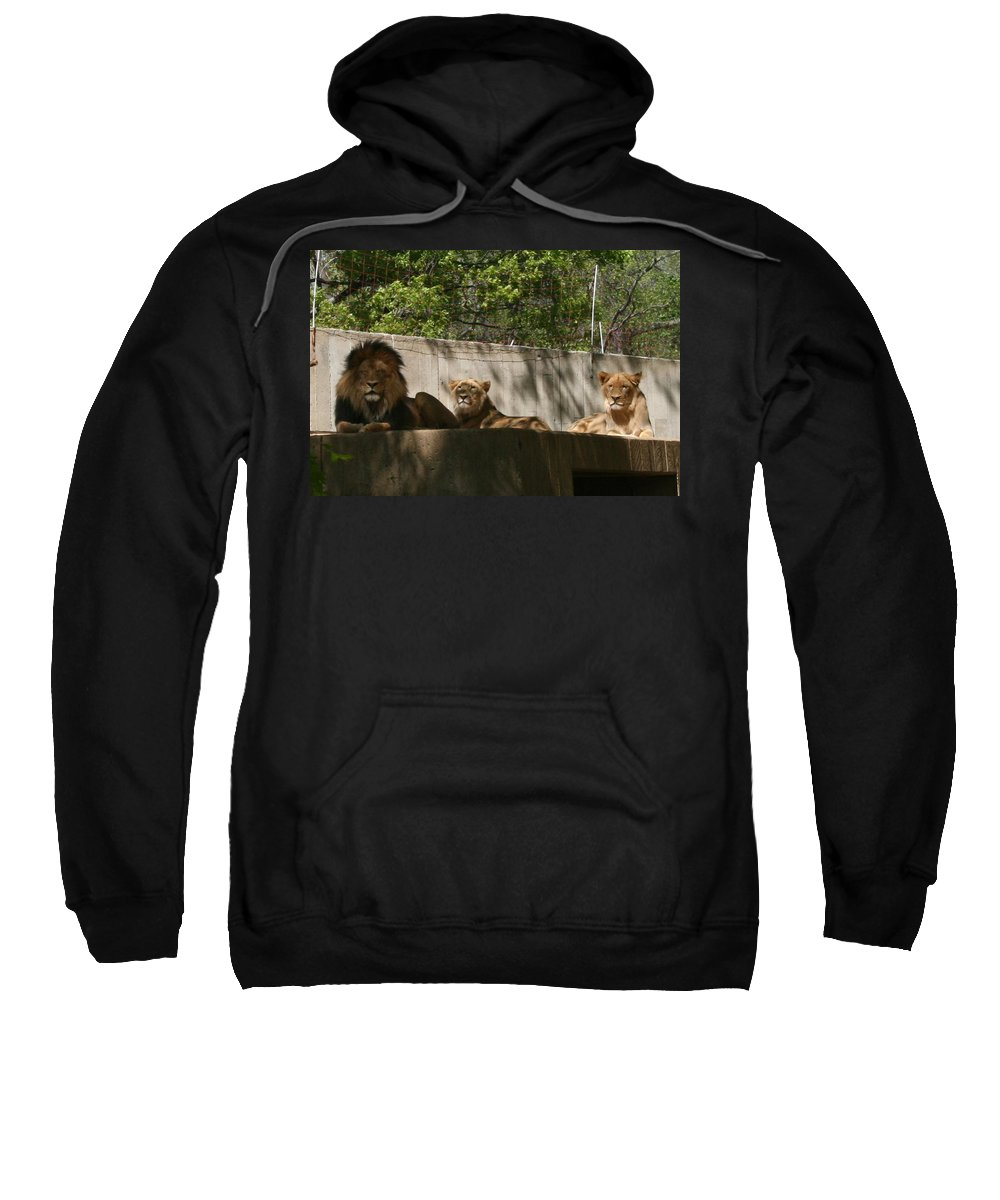 Lion Sweatshirt featuring the photograph Lion Around by Stacy C Bottoms