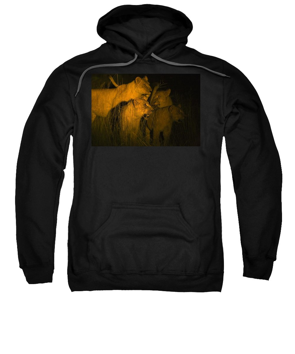 African Sweatshirt featuring the photograph Lions At Night by Carson Ganci