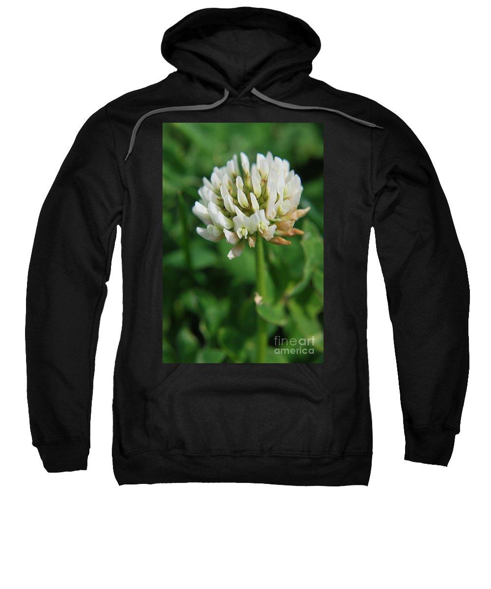 Yhun Suarez Sweatshirt featuring the photograph Little White Flower by Yhun Suarez