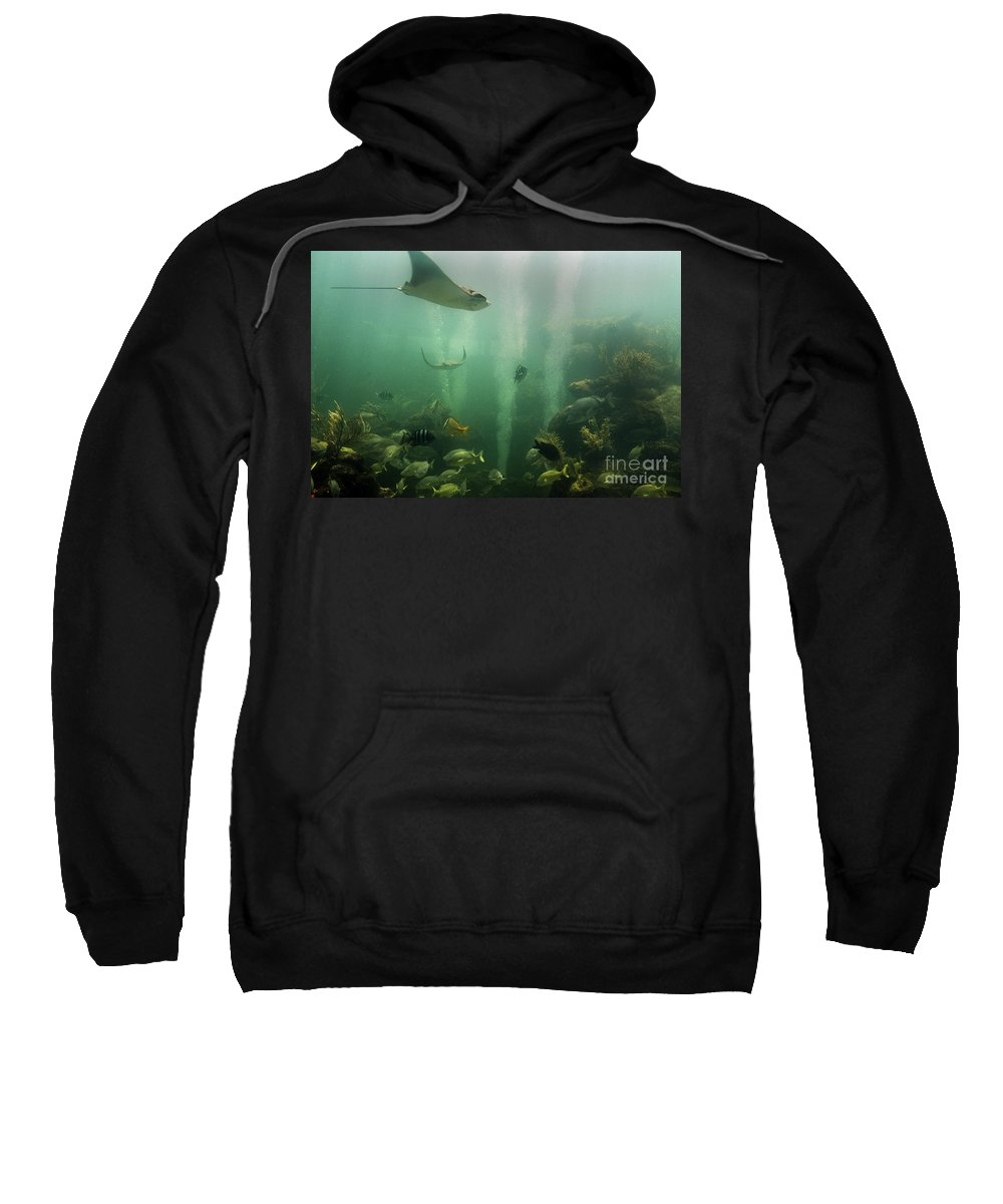 Reef Sweatshirt featuring the photograph Live Coral Reef by Beth Phifer
