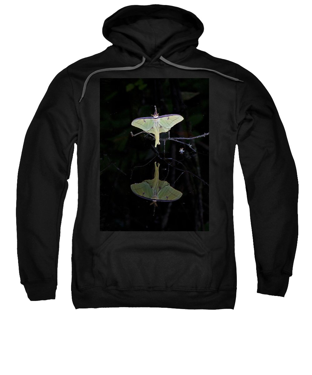 Moth Sweatshirt featuring the photograph Luna Moth And Reflection by Bill Swindaman
