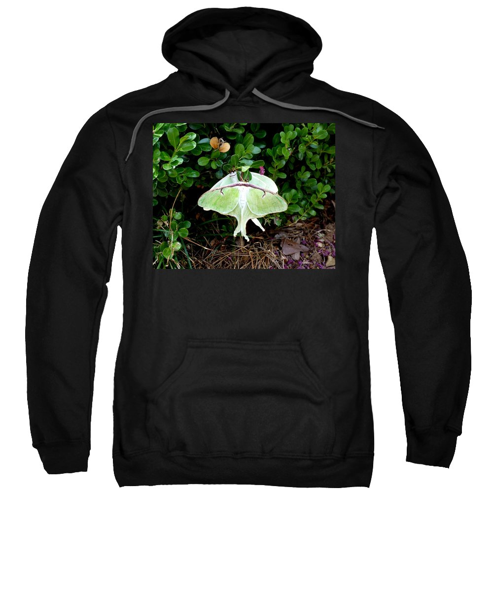 Luna Sweatshirt featuring the photograph Luna Moths' Afternoon Delight by Carla Parris