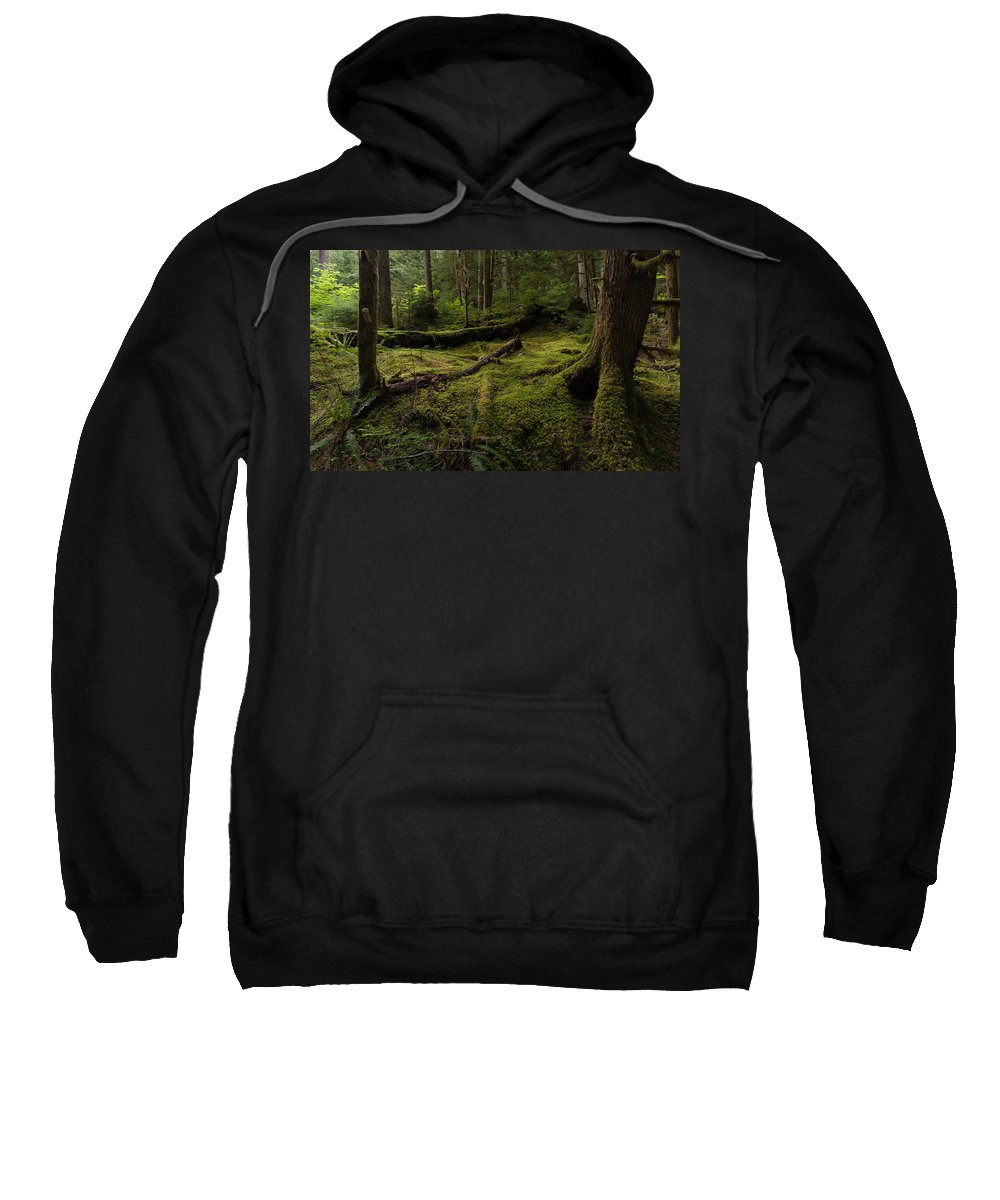 Forest Sweatshirt featuring the photograph Magical Forest by Mike Reid