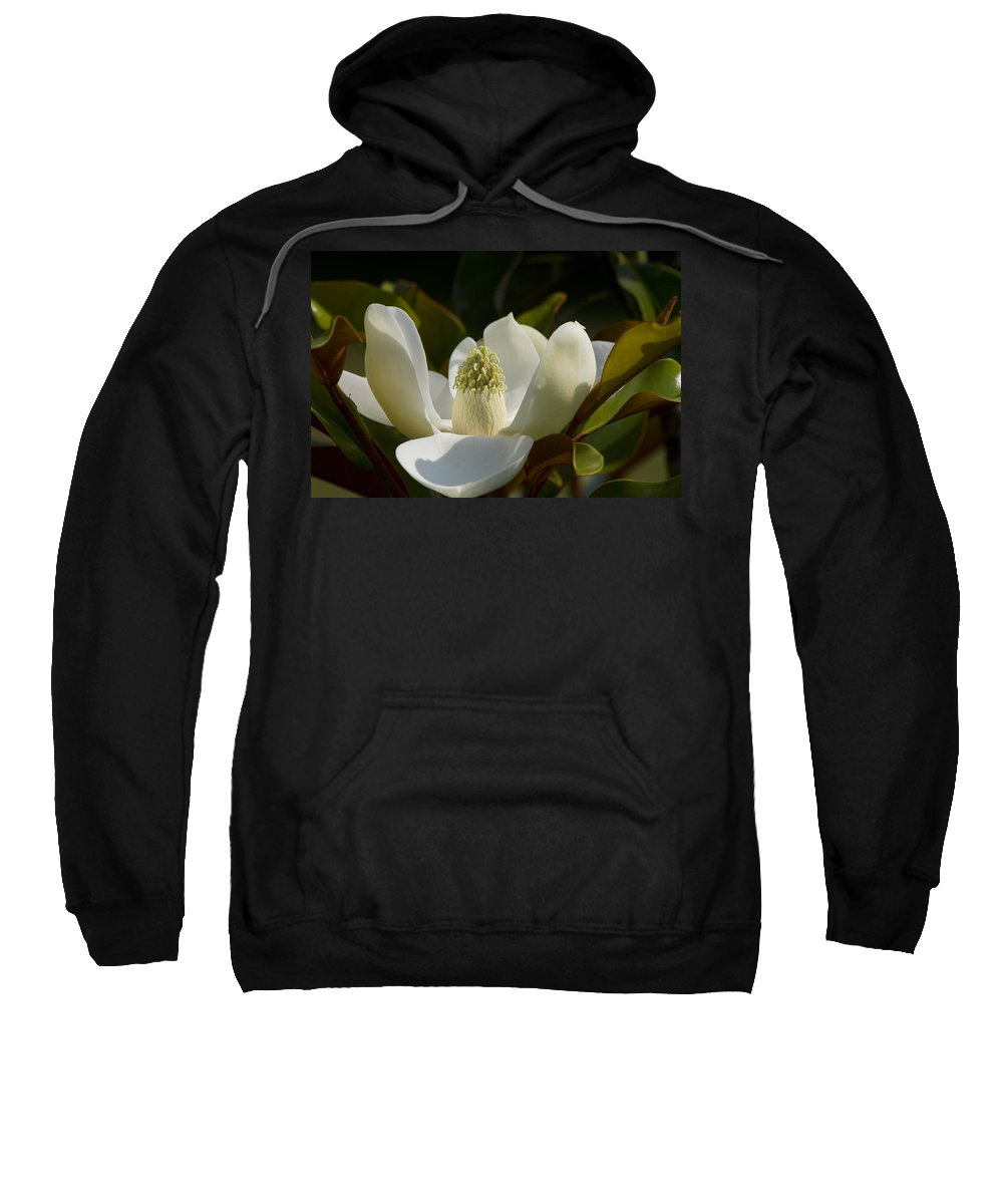 Magnolia Macrophylla Sweatshirt featuring the photograph Magnificent Alabama Magnolia Blossom by Kathy Clark