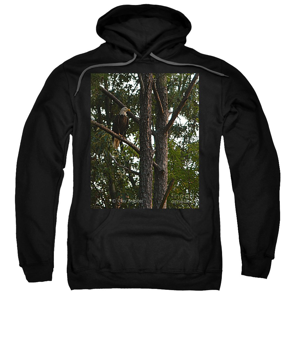 All Rights Reserved Sweatshirt featuring the photograph Majestic Bald Eagle by Clayton Bruster