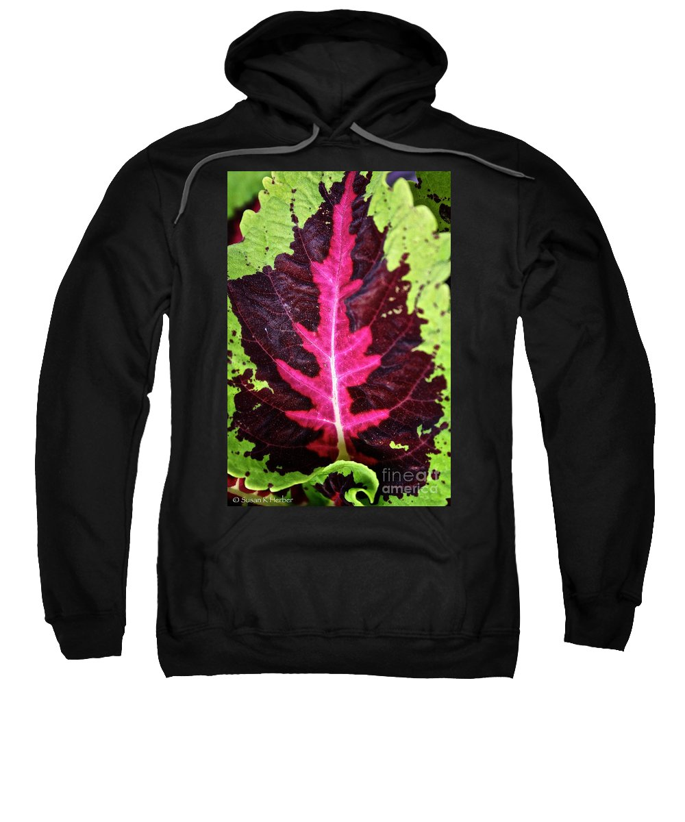 Plant Sweatshirt featuring the photograph Many Leaves Of Coleus by Susan Herber