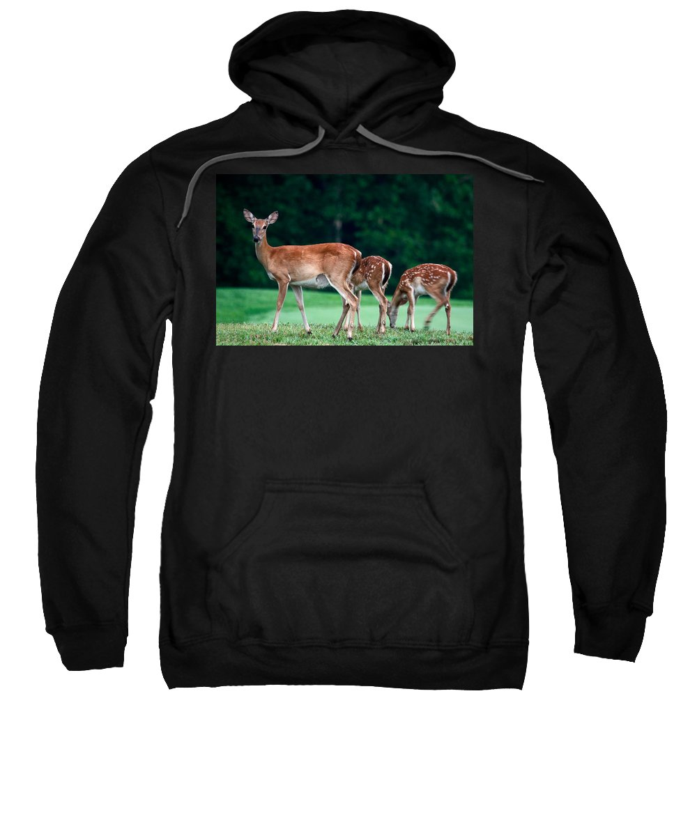 3 Deer Sweatshirt featuring the photograph Mom With Twins by Sally Weigand