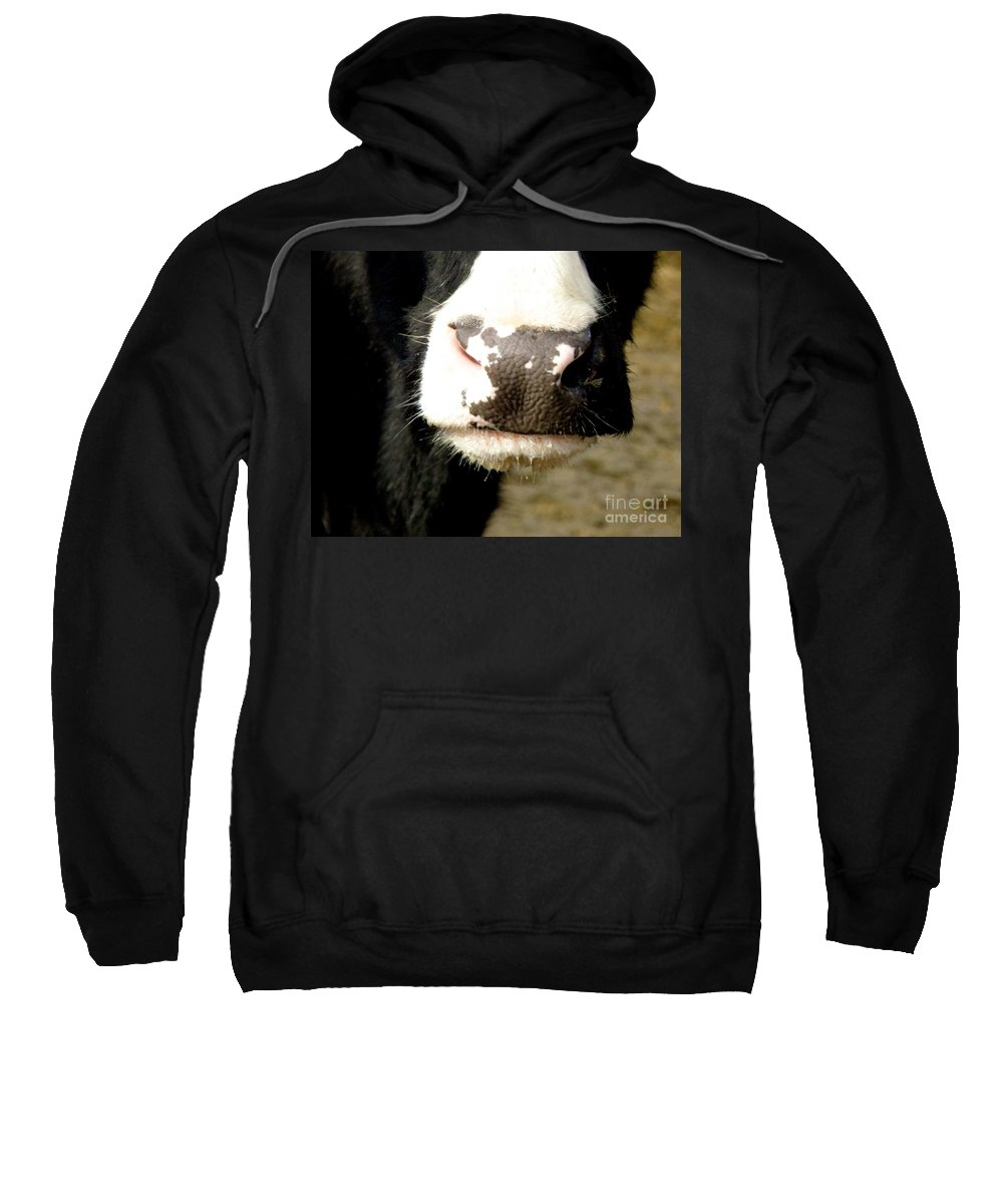 Cow Sweatshirt featuring the photograph Moo by Lainie Wrightson
