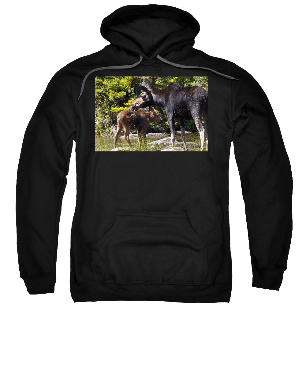 Moose Sweatshirt featuring the photograph Moose Brunch by Glenn Gordon