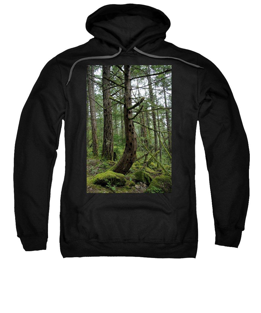 Tree Sweatshirt featuring the photograph More Island Tree Art by John Greaves