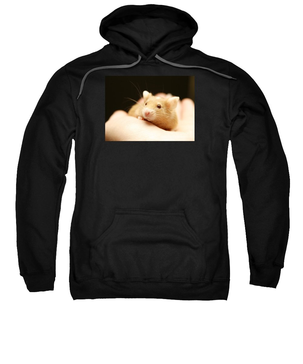Mouse Sweatshirt featuring the photograph Mouse by Masha Batkova