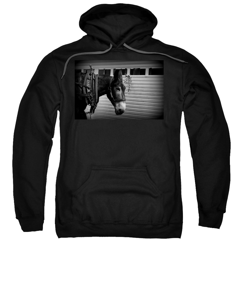 Mule Sweatshirt featuring the photograph Mule - Tied Up For A While by Travis Truelove