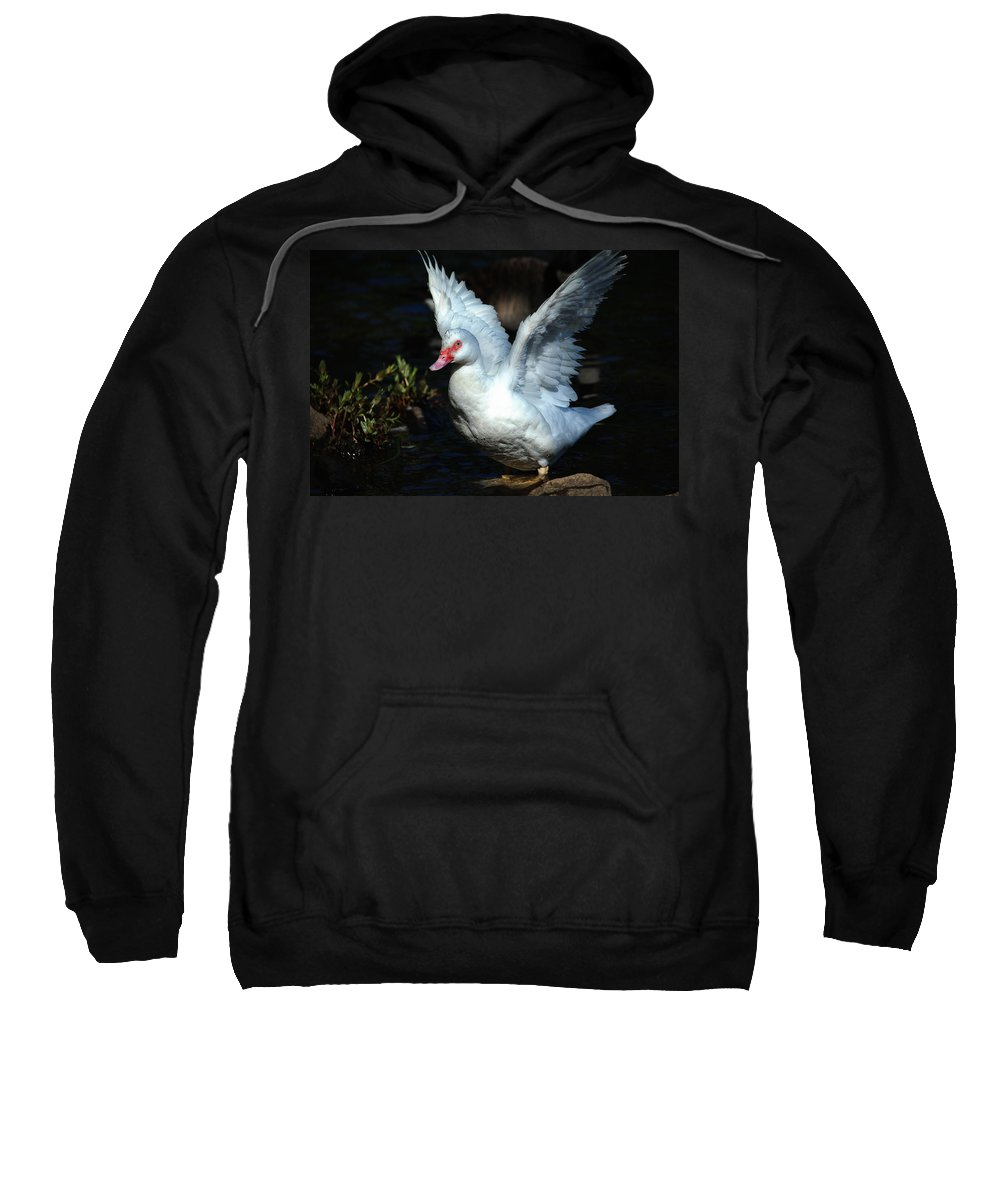 Ducks Sweatshirt featuring the photograph Muscovy Duck by Karol Livote