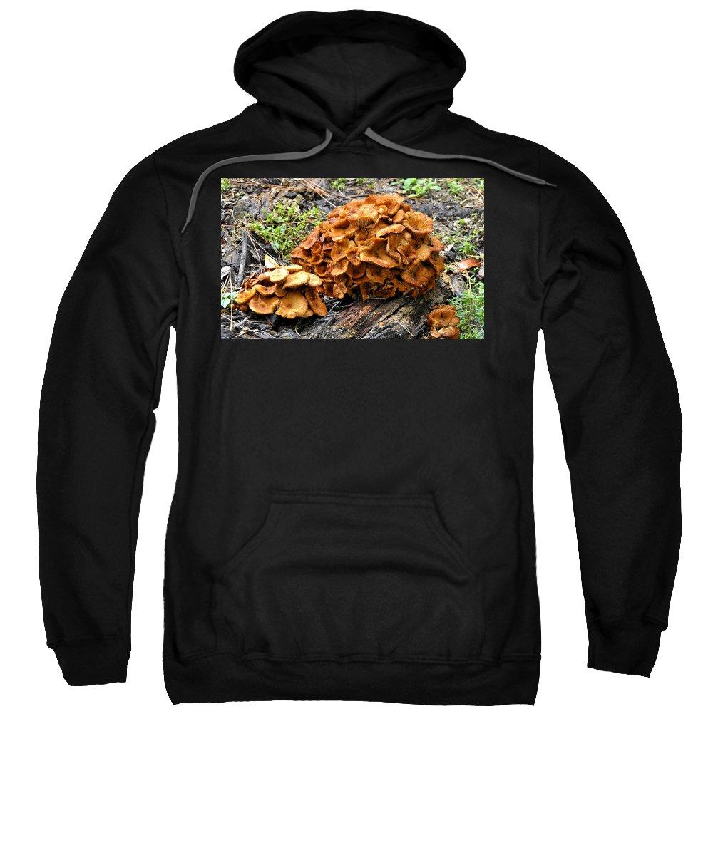 Fine Art Photography Sweatshirt featuring the photograph Mushroom Flower by David Lee Thompson