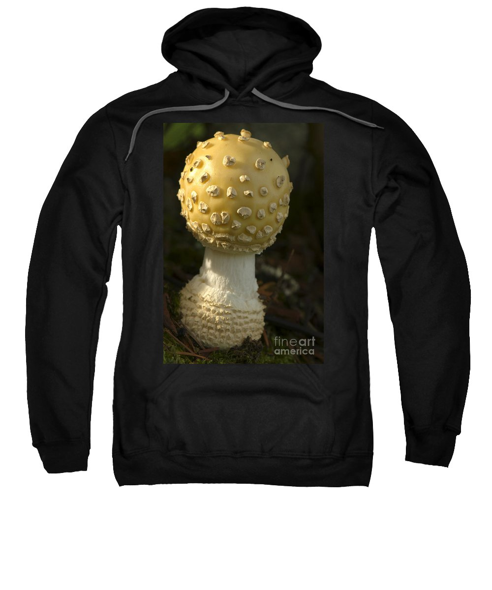 Mushroom Sweatshirt featuring the photograph Mushroom by Sharon Talson
