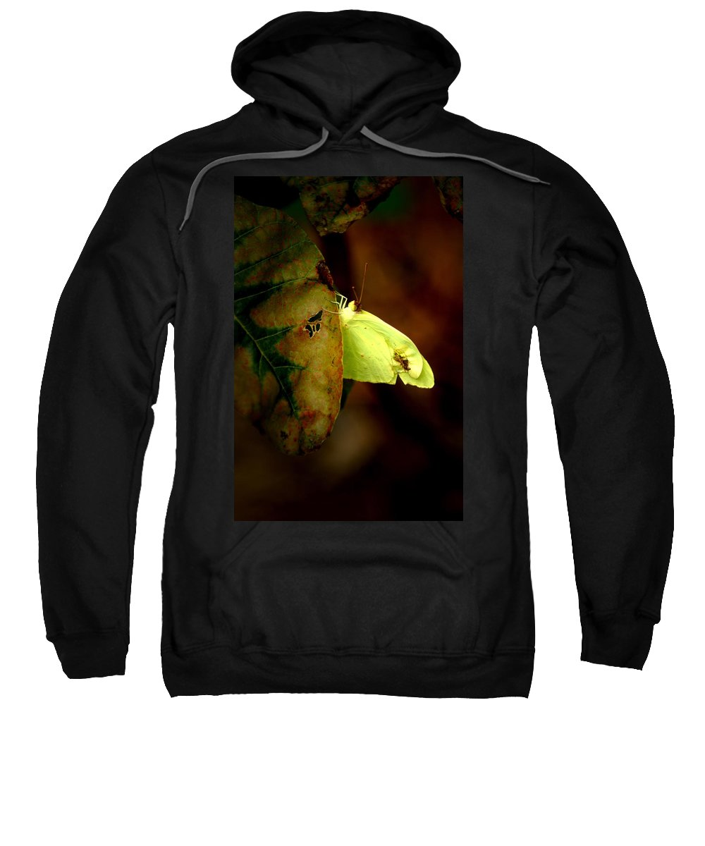 Insect Sweatshirt featuring the photograph Mystical World by David Weeks