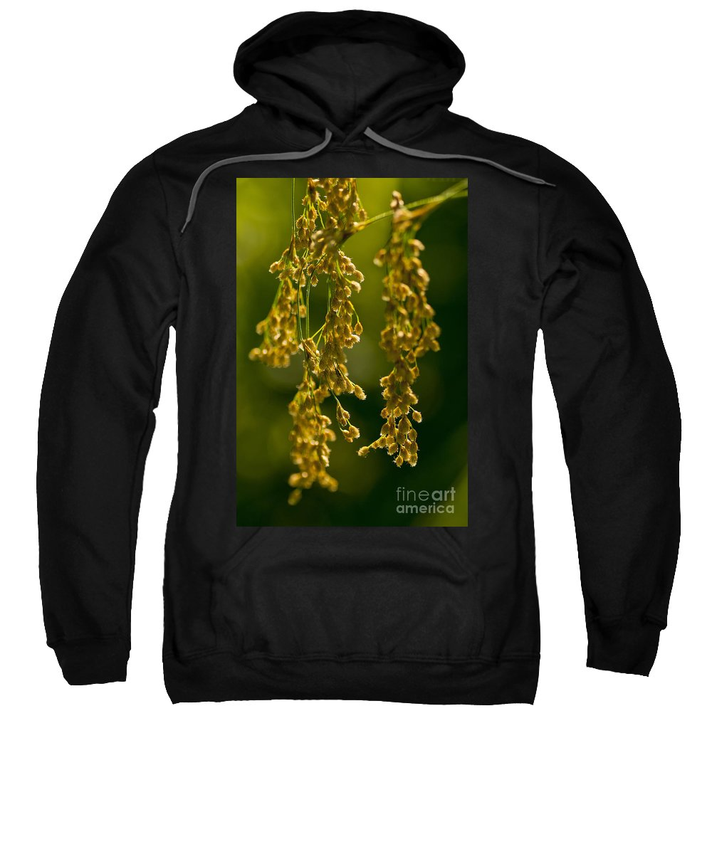 Abstract Sweatshirt featuring the photograph Nature's Abstract 7 by Michael Cummings