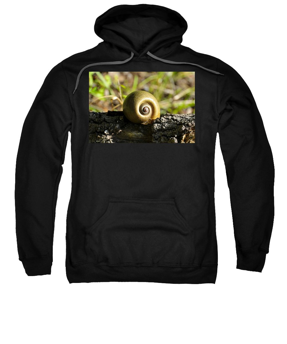 Snail Sweatshirt featuring the photograph Natures Perfection by David Lee Thompson