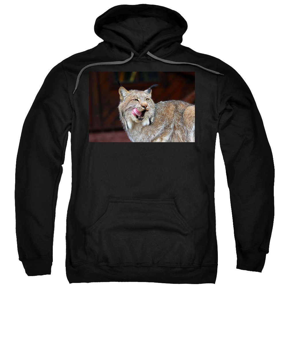 Alert Sweatshirt featuring the photograph North American Lynx by Paul Fell