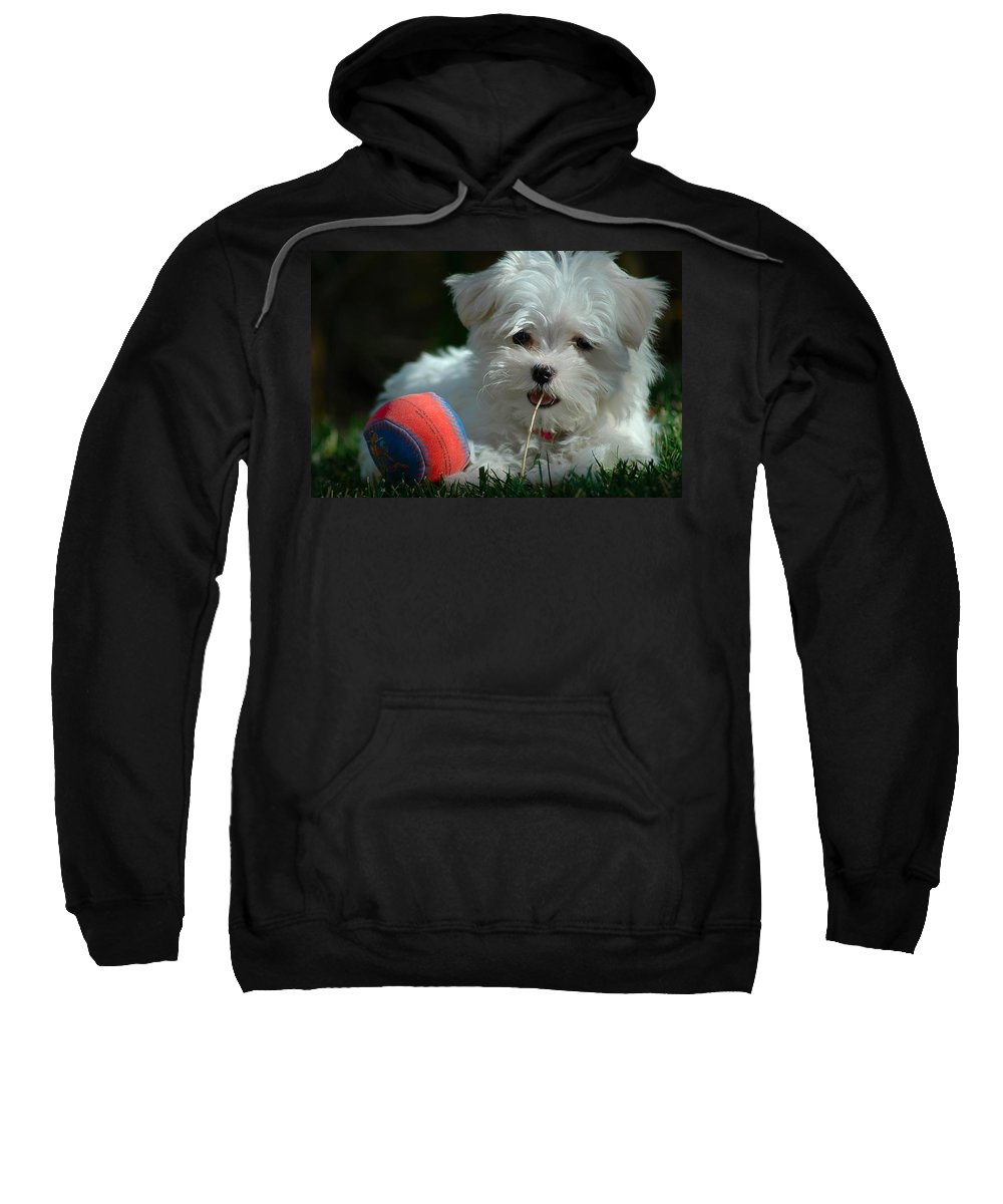 Dogs Sweatshirt featuring the photograph Not Just Sugar And Spice by Lynn Bauer