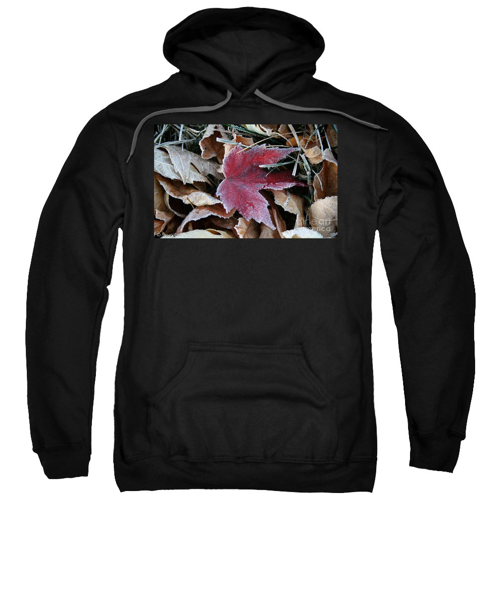 Outdoors Sweatshirt featuring the photograph October Frost by Susan Herber