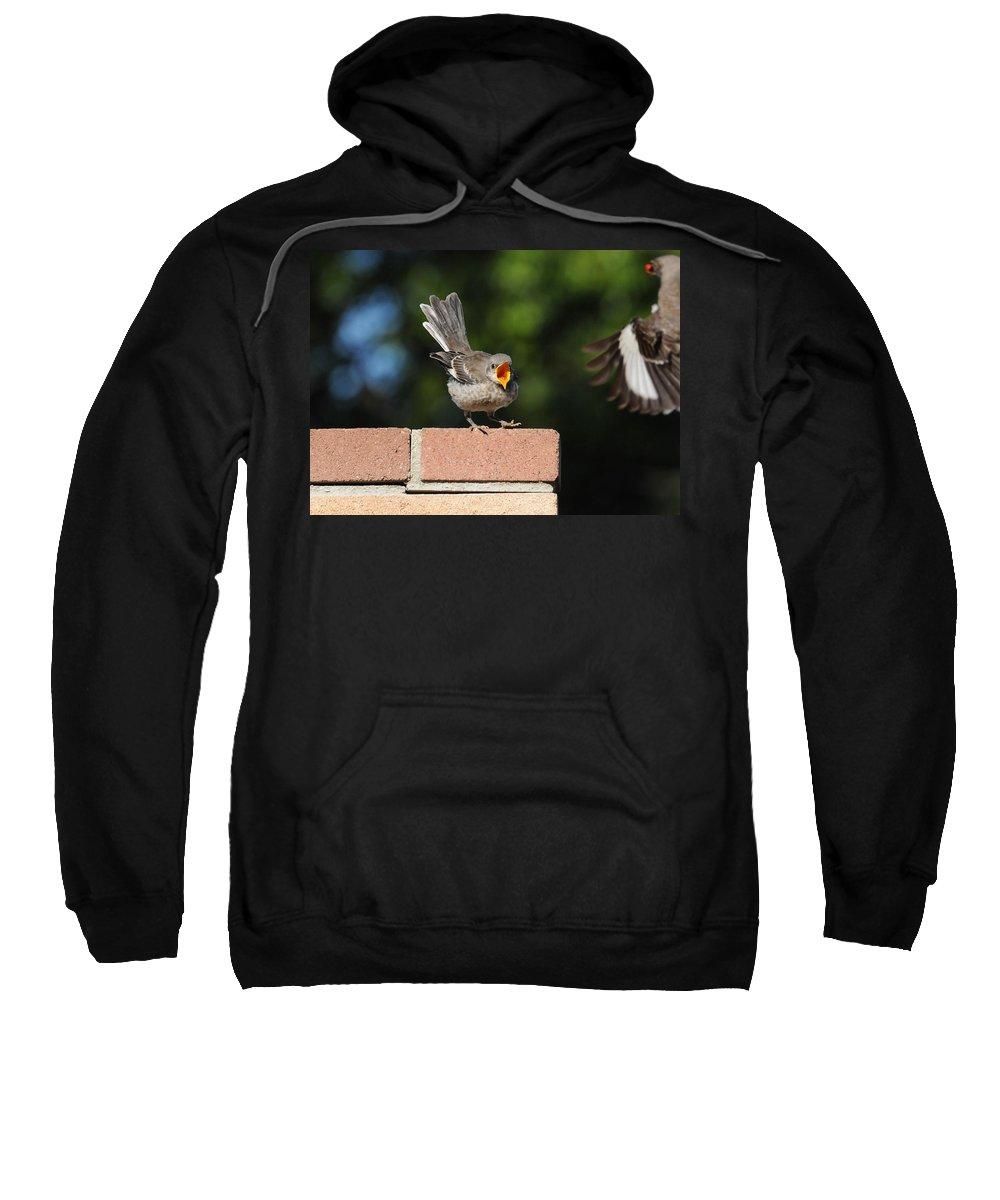 Birds Sweatshirt featuring the photograph Oh...so Demanding by Lynn Bauer