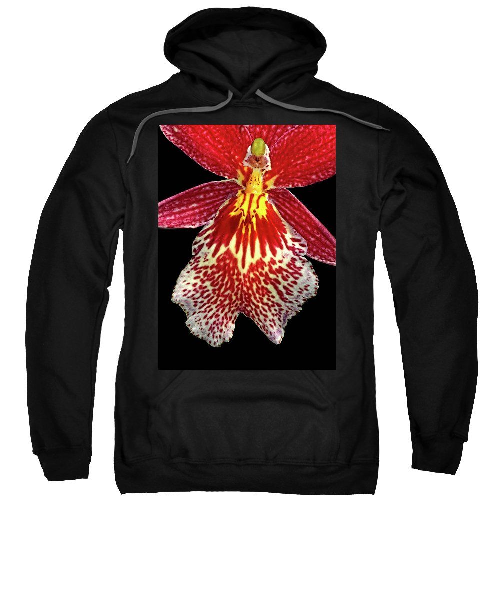 Orchid Sweatshirt featuring the photograph Orchid Hybrid by Dave Mills