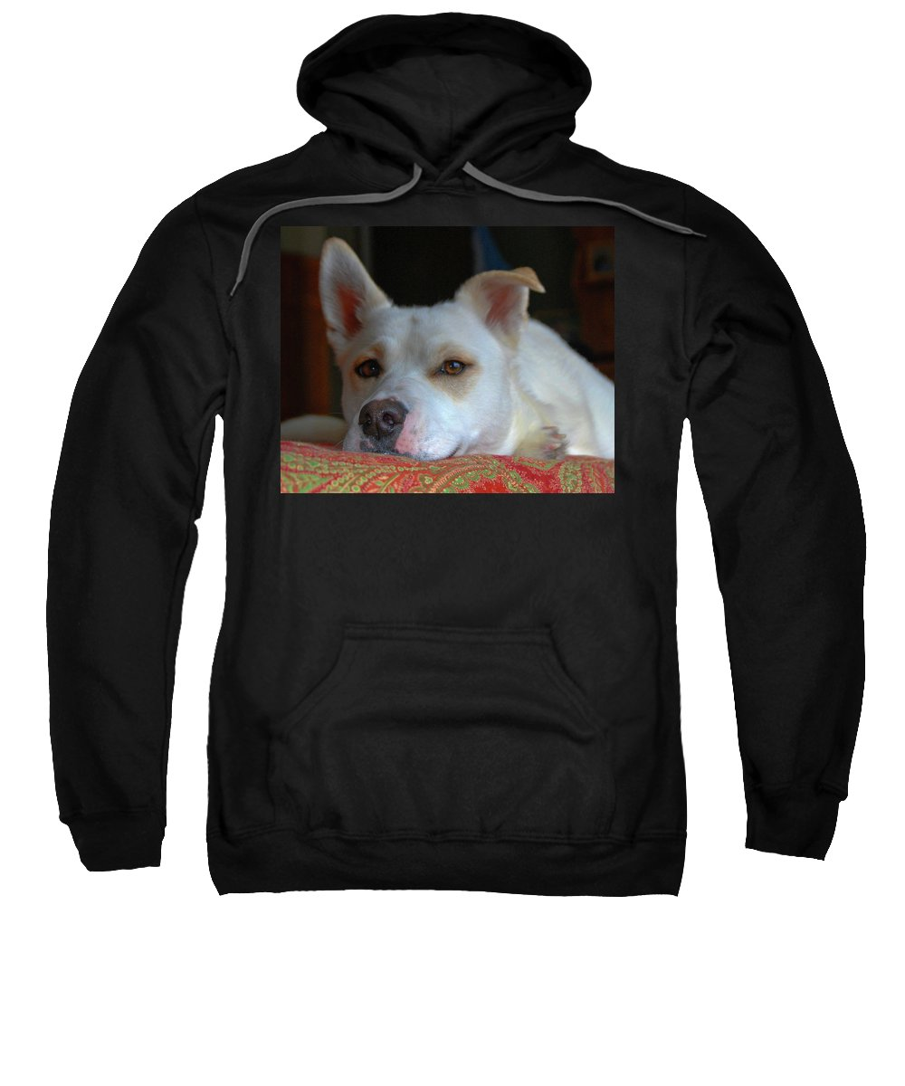 Dog Sweatshirt featuring the photograph Orvis 0242 by Guy Whiteley