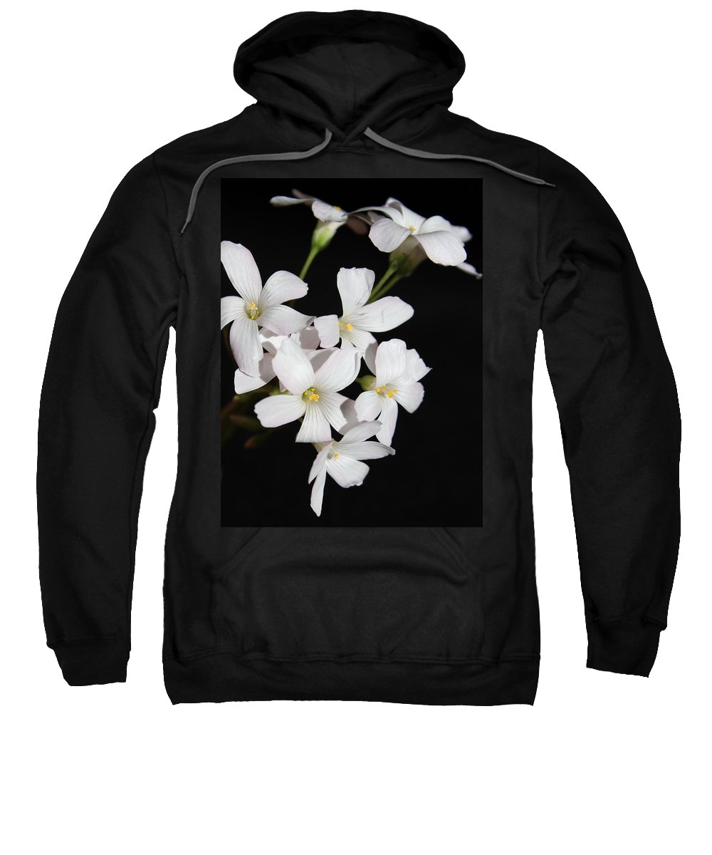 Floral Sweatshirt featuring the photograph Oxalis Flowers 3 by Kume Bryant