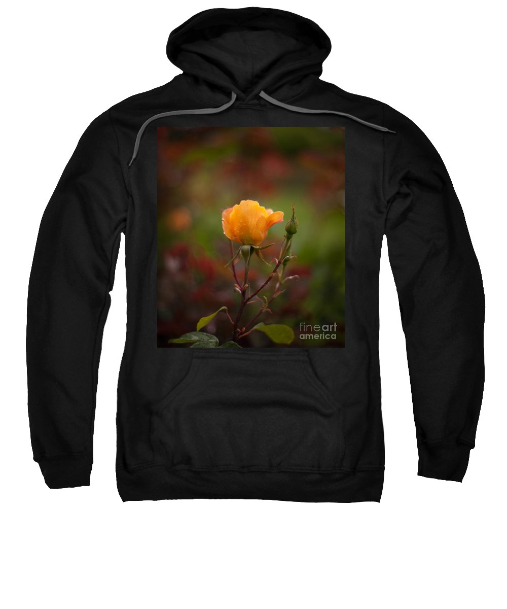 Flower Sweatshirt featuring the photograph Painterly Yellow Rose by Mike Reid