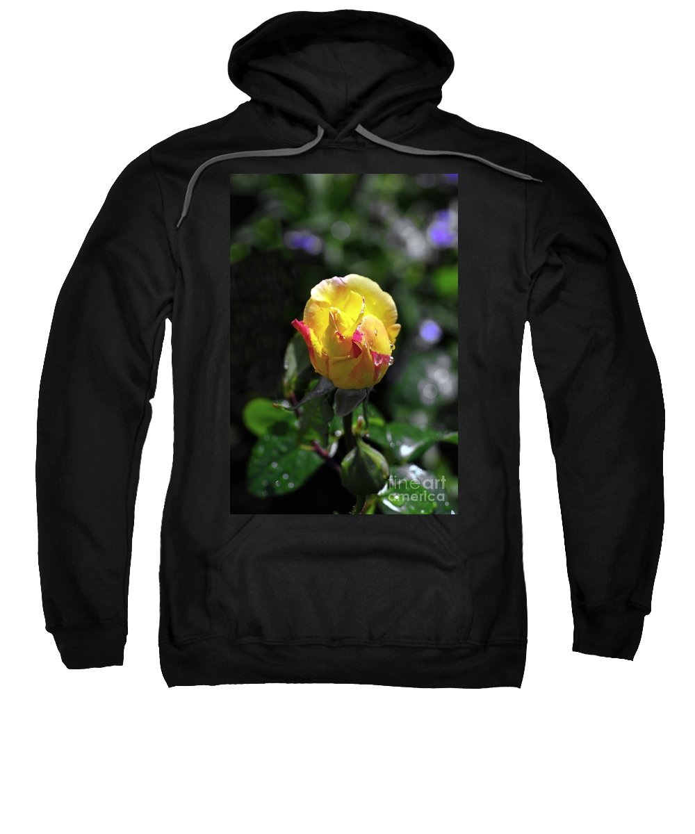 Peace Rose Sweatshirt featuring the photograph Peace Rose by John Chatterley