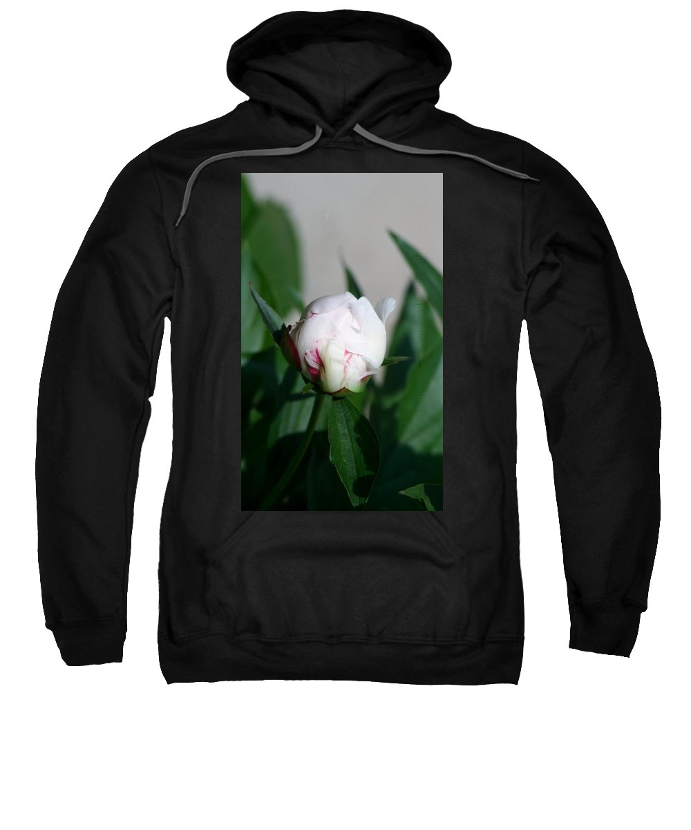 Sweatshirt featuring the photograph Peppermint Peony by Barbara S Nickerson
