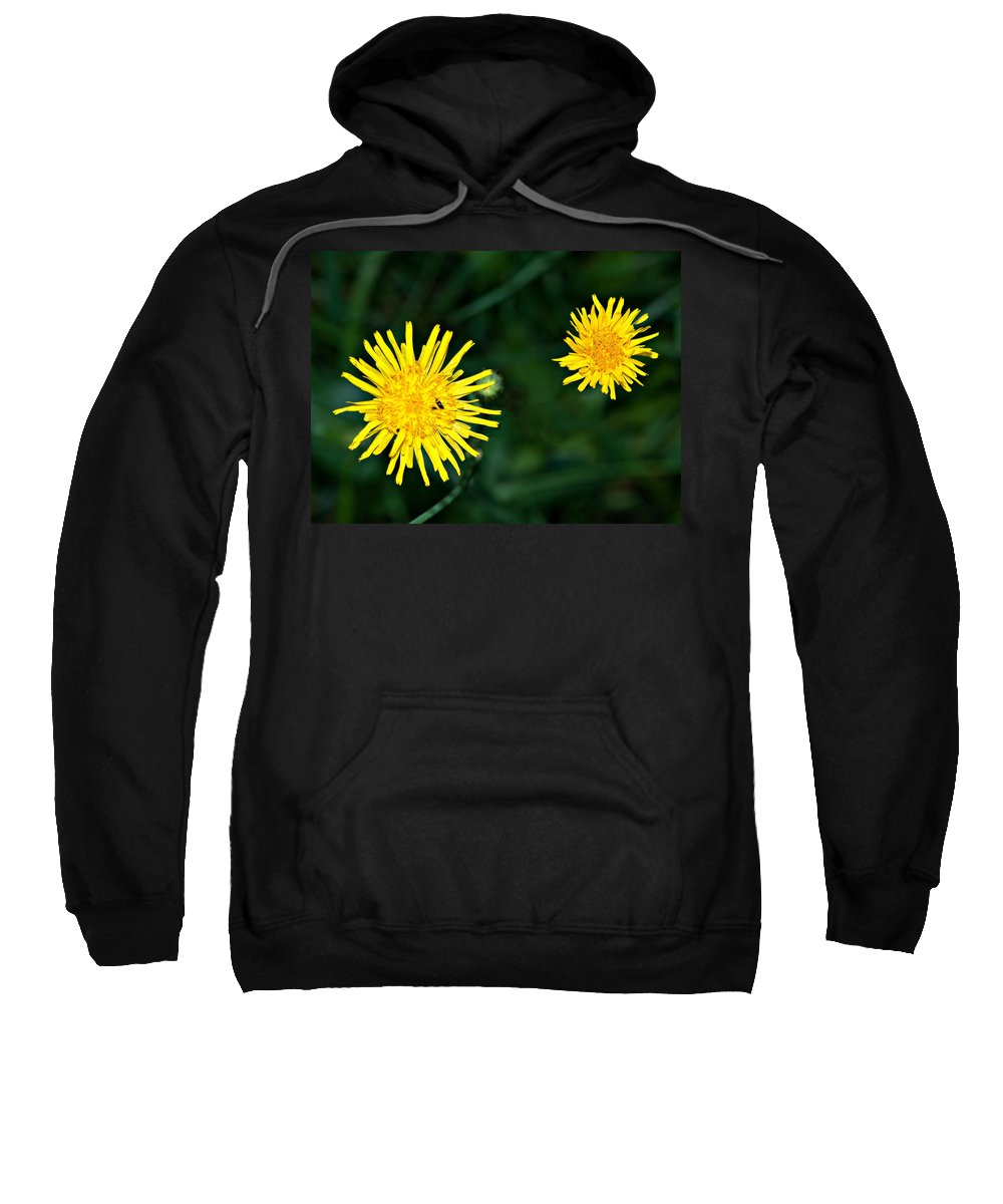 Flowers Sweatshirt featuring the photograph Perennial Sow-thistle by Steve Harrington