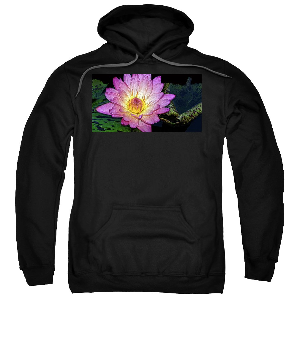 Waterlily Sweatshirt featuring the photograph Pink And Yellow Waterlily by Dave Mills