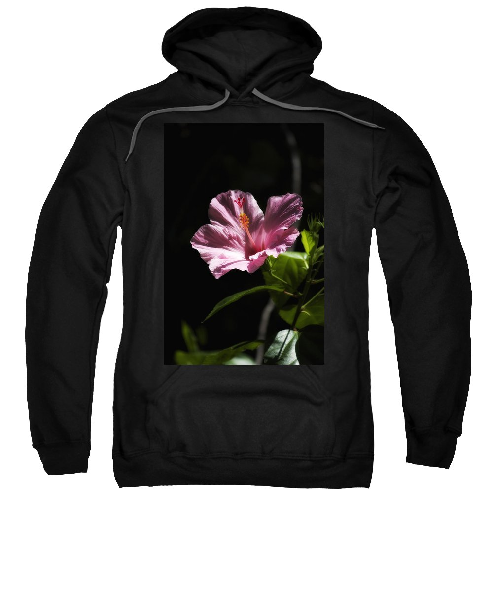 Florals Sweatshirt featuring the photograph Pink Hibiscus by Linda Dunn